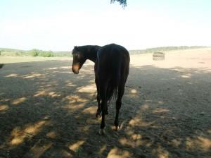 bottyan_equus13.06.30_008