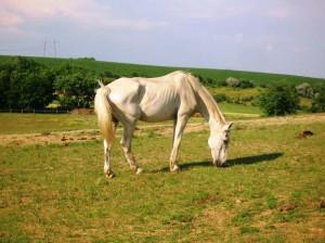 bottyan_equus13.06.30_010