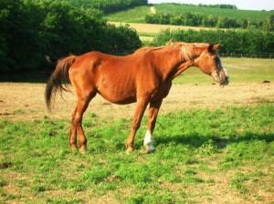bottyan_equus13.06.30_011