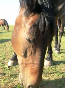bottyan_equus13.06.30_014