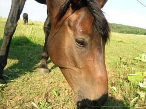 bottyan_equus13.06.30_015