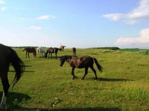 bottyan_equus13.06.30_016