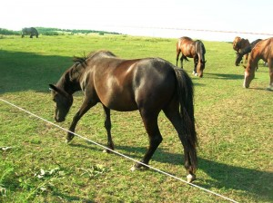 bottyan_equus13.06.30_018