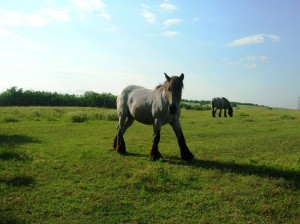 bottyan_equus13.06.30_019