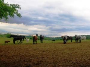 bottyan_equusnal130527_038