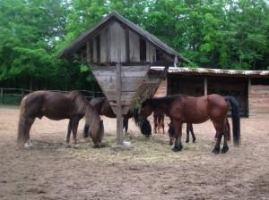 bottyan_equusnal130527_049