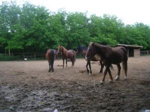 bottyan_equusnal130527_051