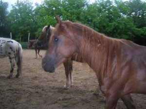 bottyan_equusnal130527_055
