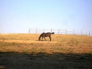 bottyan_equus13.08.03._047