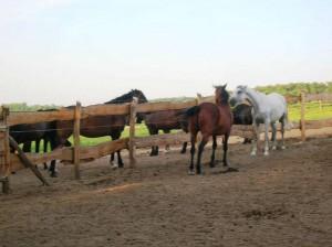 bottyan_equus14.06.09._003