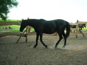 bottyan_equus14.06.09._004