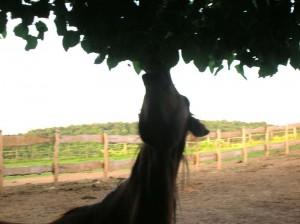bottyan_equus14.06.09._011