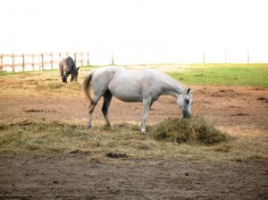 bottyan_equus14.06.09._013