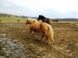 bottyan_equus_hungaria14.02.22._034