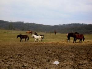bottyan_equus_hungaria14.02.22._041