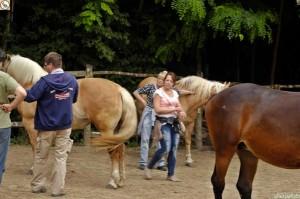 lovak_kozott