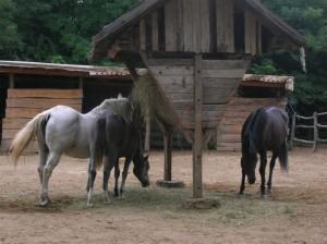 bottyan_equus11_09_10_001