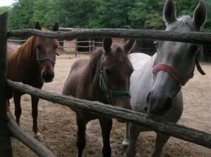 Hortról mentett lovak
