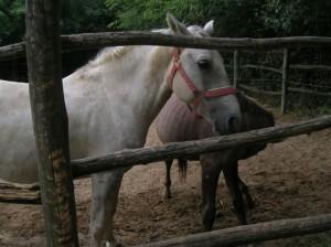 bottyan_equus11_09_10_004