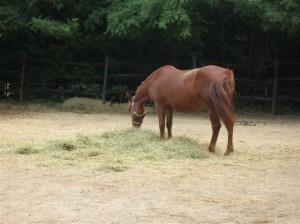 bottyan_equus11_09_10_012