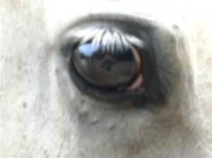 bottyan_equus11_09_10_013