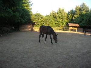 bottyan_equus_110712_01