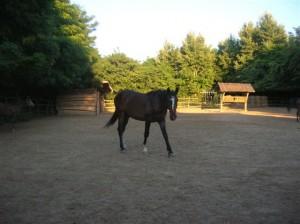 bottyan_equus_110712_02