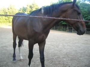bottyan_equus_110712_03