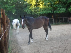 bottyan_equus_110712_04