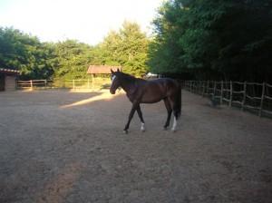 bottyan_equus_110712_05
