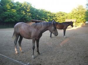 bottyan_equus_110712_09