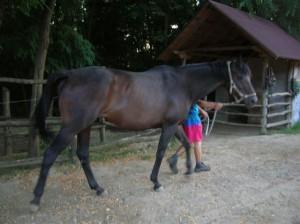 bottyan_equus_110712_10