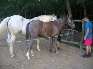 bottyan_equus_110712_12