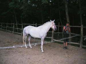 bottyan_equus_110712_14