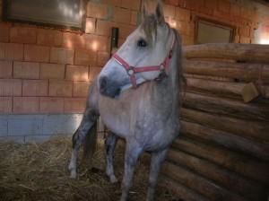 hatvani_kobzott_lovak06