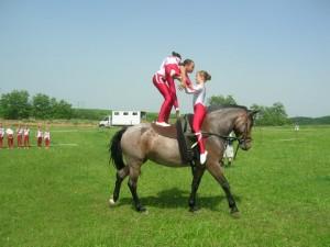 Lóerőkkel a lovakért