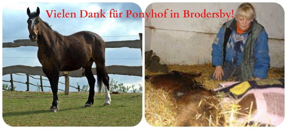 ponyhof-brodersby-2