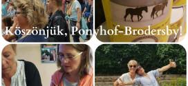 ponyhof-brodersby